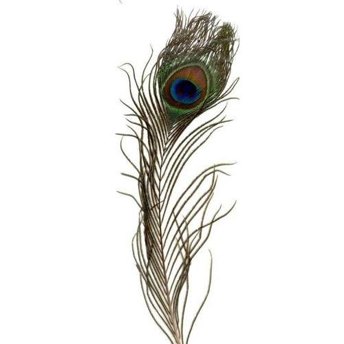 1 ST (1ST) Veer pauw 20-30 cm 1 ST