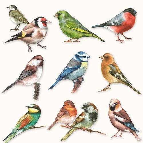 CraftEmotions servetten 5st - Verzameling van vogels 33x33cm Ambiente 13310165