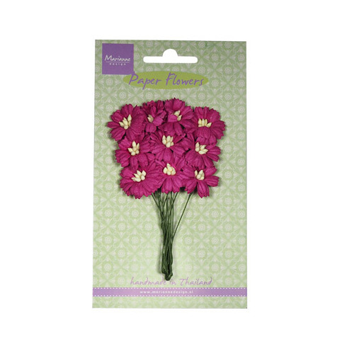 Daisies - medium pink