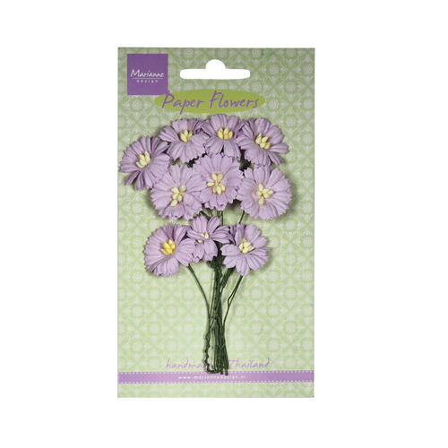 Daisies - light lavender