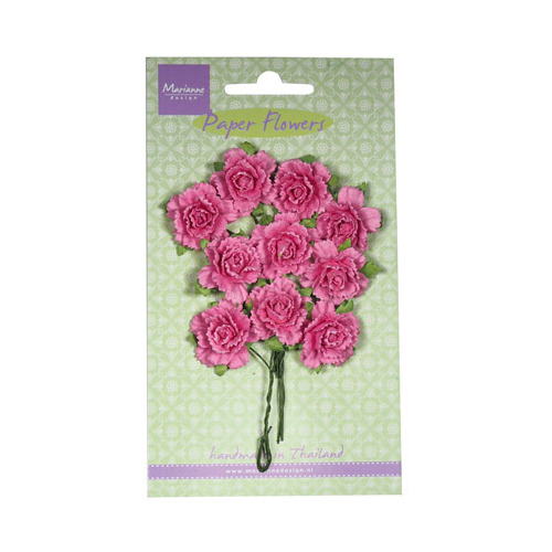 Carnations - bright pink
