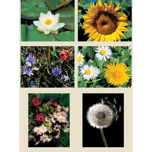 knipvel A4 bloemen