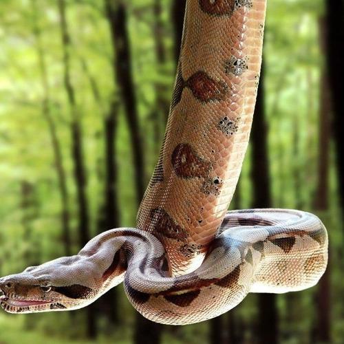 01-python diamond painting python 40 x 50