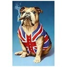 bulldog diamond painting bulldog sigaar 30 x 40