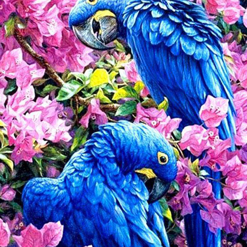 HLQ-01569 Diamond Painting vierkant blauwe papegaai