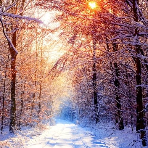 01-winter Diamond Painting vierkante steentjes - sneeuw in bossen