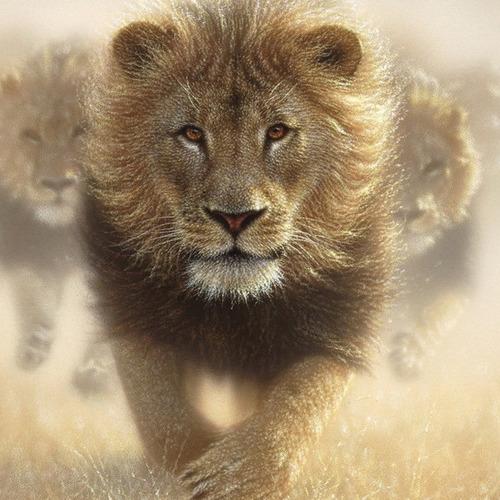 A076 Diamond Painting rond leeuw