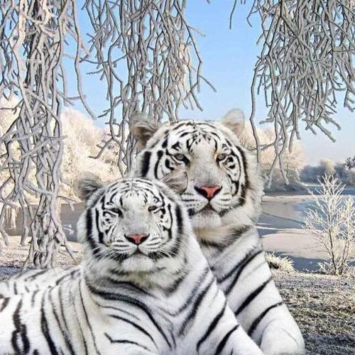 HLQ-02544 Diamond Painting rond tijgers in sneeuw