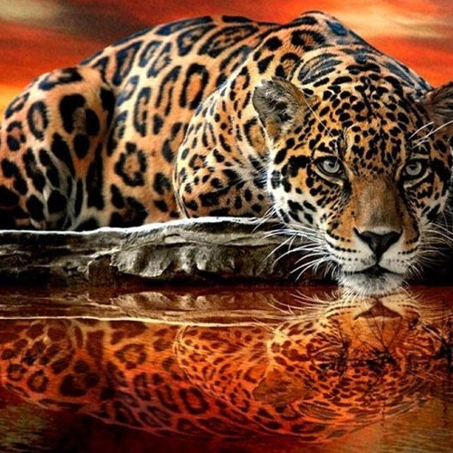 HLQ-01775 Diamond Painting rond panther drinkt uit water