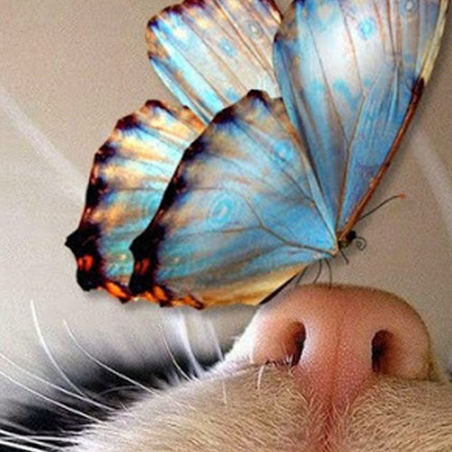 A799 Diamond Painting rond vlinder op neus