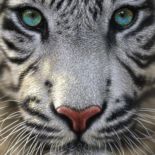A090 Diamond Painting rond tijger