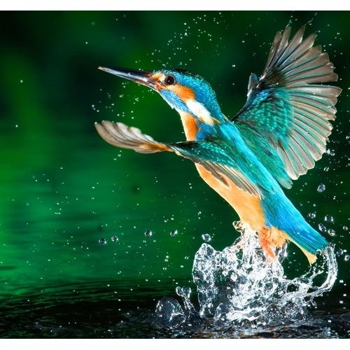 Diamond Painting kolibri water