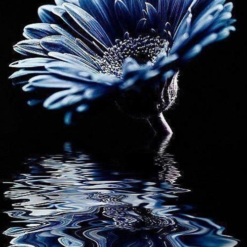 Diamond Painting gerbera blauw