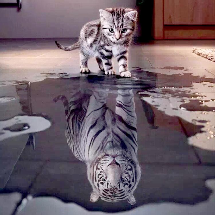 Diamond Painting poes tijger