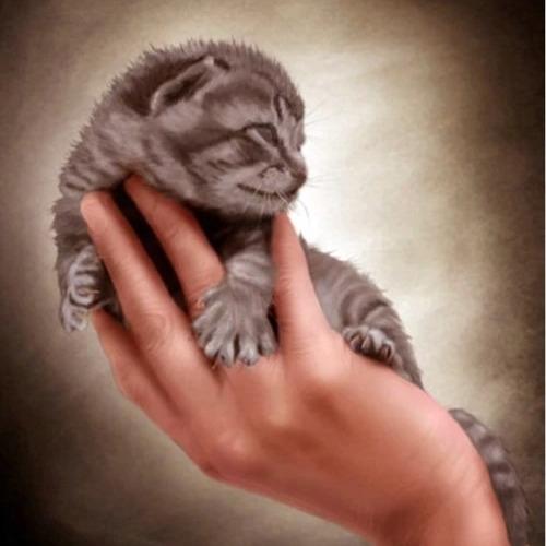 Diamond Painting Kitten in hand