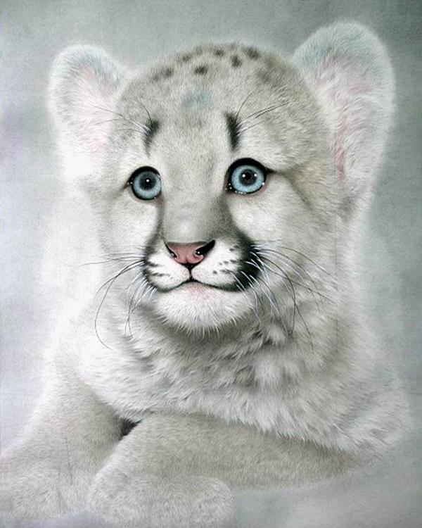 01-61141 Diamond Painting ronde steentjes witte leeuw
