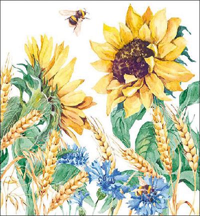 Sunflower And Wheat White