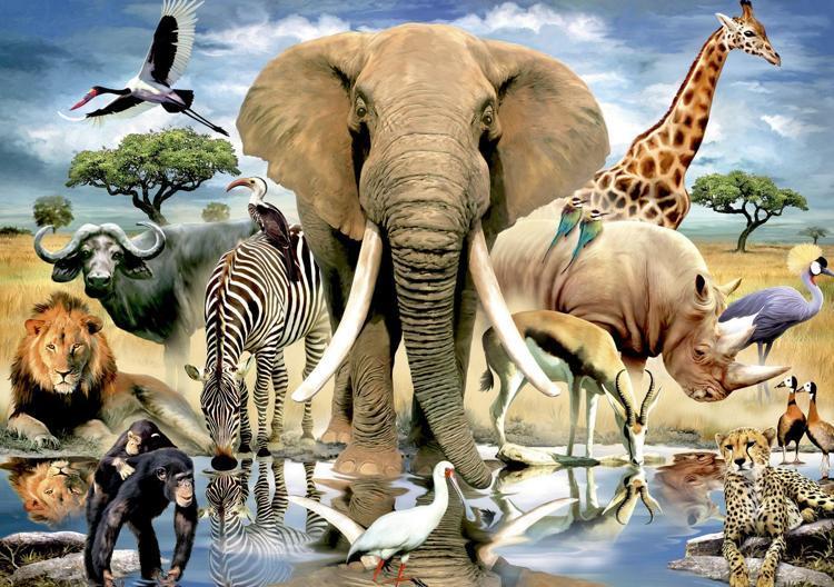 Diamond Painting wilde dieren