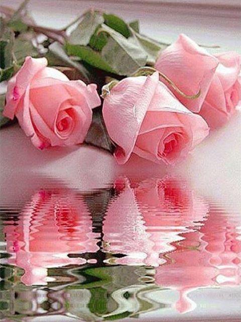 Diamond Painting rozen spiegelbeeld