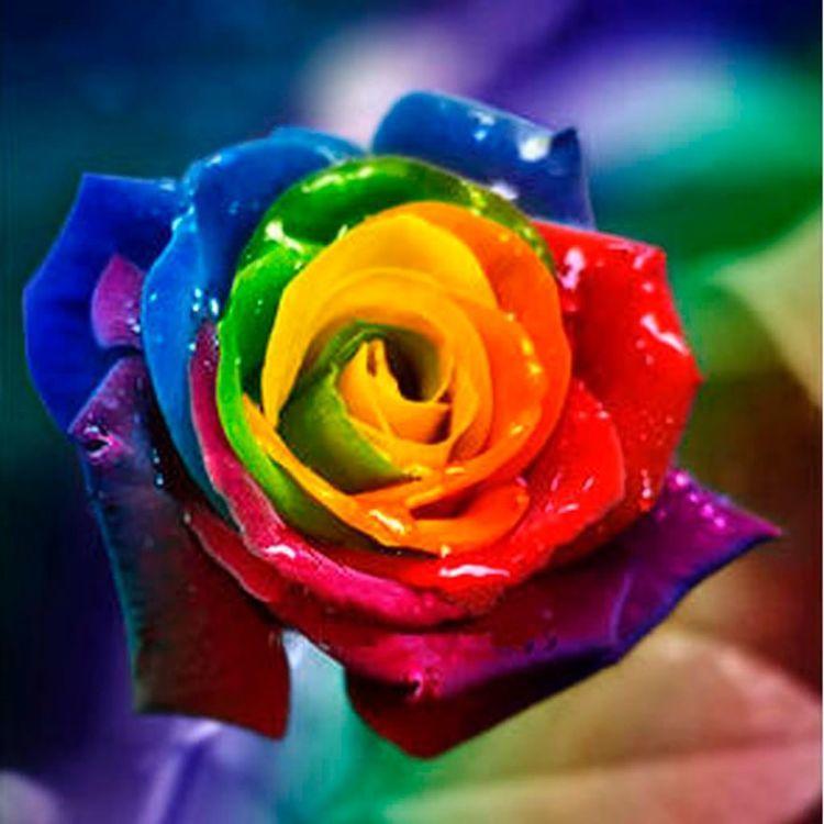 Diamond Painting colour rose
