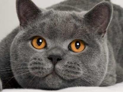 Diamond Painting kat grijs
