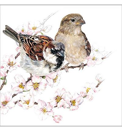 Sparrows Blossom