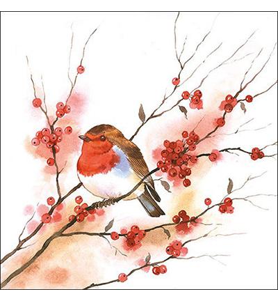 Birdy Robin