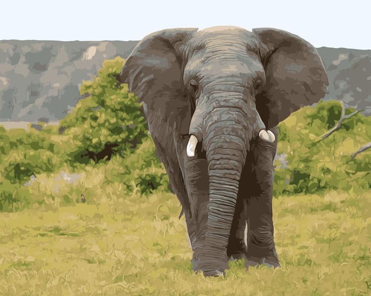 Schilderen op nummer olifant