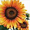 640.085 No-Count Cross Stitch Kits Sunflower 40x40cm