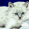 DIAMOND ART Kits 32x32cm WHITE CAT