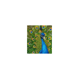 DIAMOND ART Kits 37x42cm PEACOCK