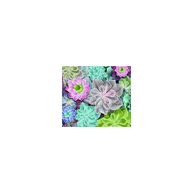 DIAMOND ART Kits 37x42cm SUCCULENTS