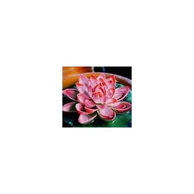 DIAMOND ART Kits 37x42cm LOTUS